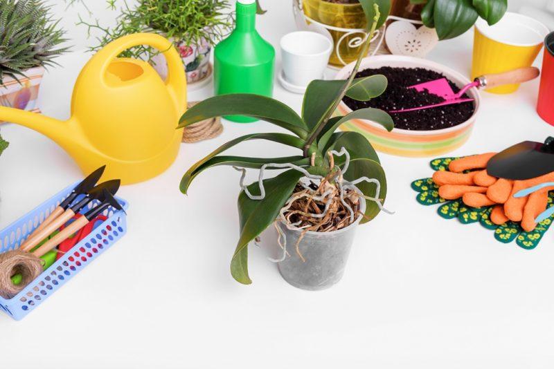 Как правильно поливать орхидеи
