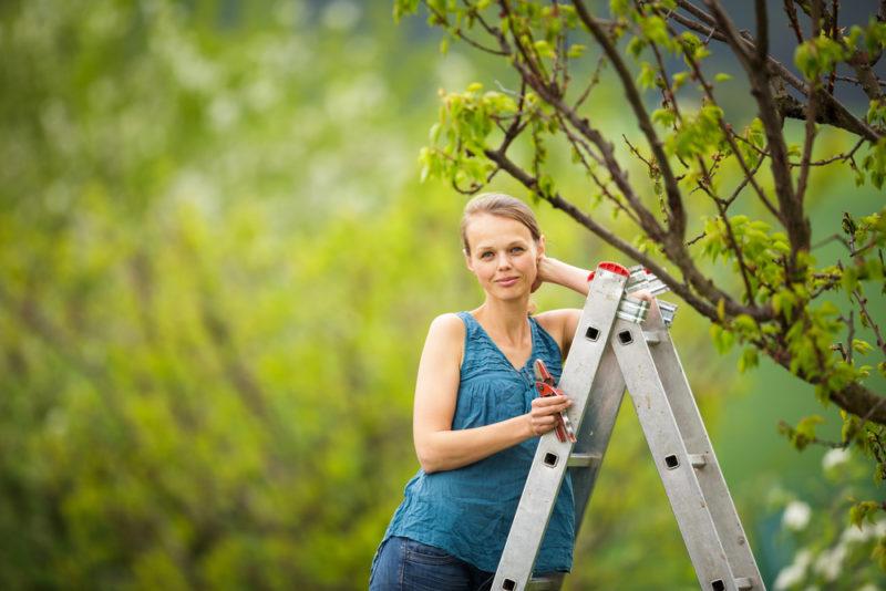 Одна опора хорошо, а две — лучше: виды подпорок для деревьев