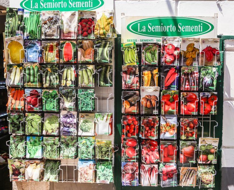 Грамотный подход в выборе семян — залог успеха богатого урожая
