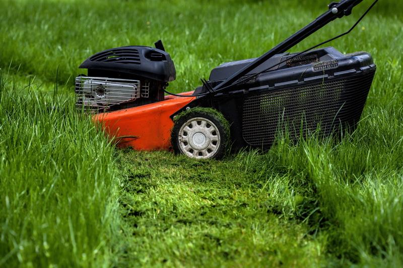 Избавление ото мха на газоне — 7 результативных способов