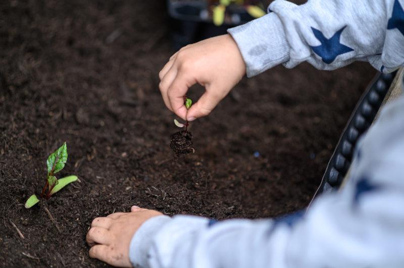 9 компонентов, которые не используют для удобрения почвы в ящиках с рассадой