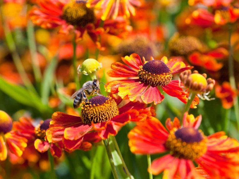 Какие цветы посадить на клумбу, залитую солнцем