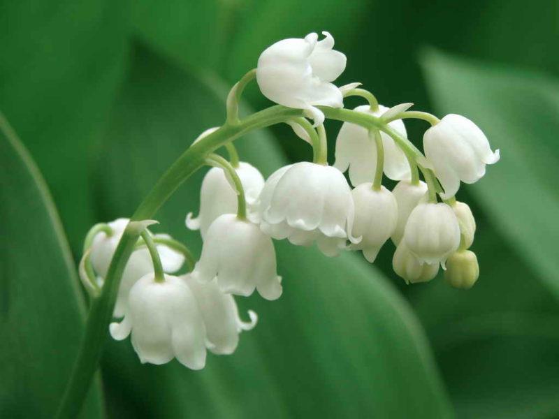 В какие краски оденется майская клумба — какие цветы распускаются в конце весны