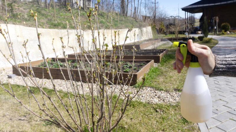 Как провести обработку сада в весенний период, и какие средства лучше всего использовать