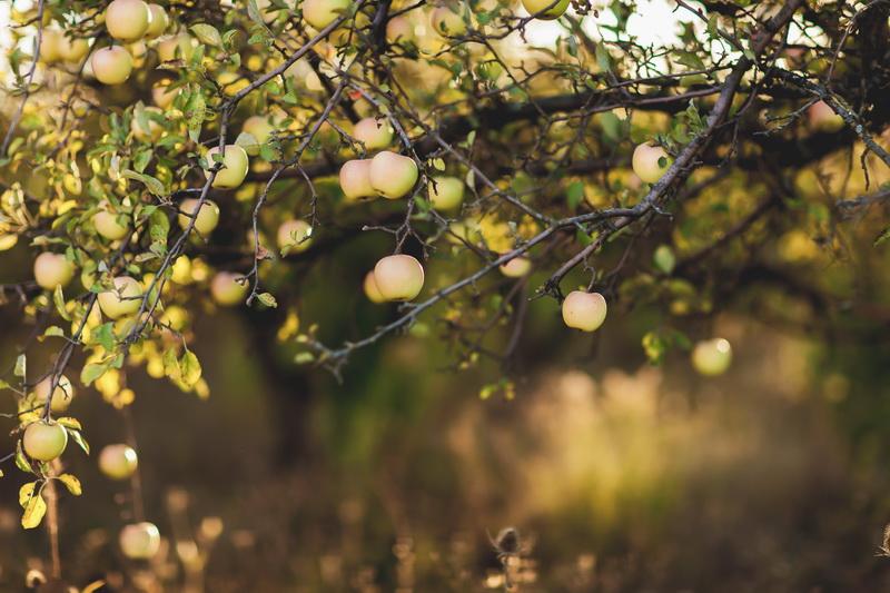 5 опасностей для садовых деревьев: почему они погибают и как с этим бороться