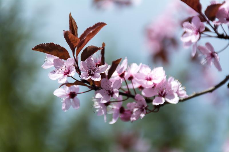 Почему при обильном цветении на деревьях нет плодов