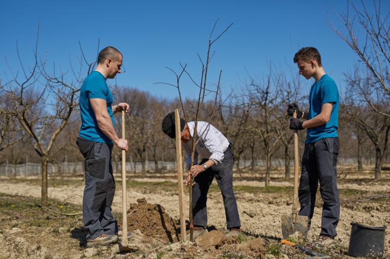 Как правильно посадить первые саженцы на дачном участке