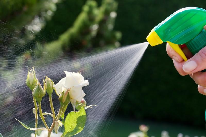 Обработка сада весной — когда начинать?