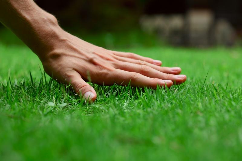 Распространенные и популярные травы для газонного посева