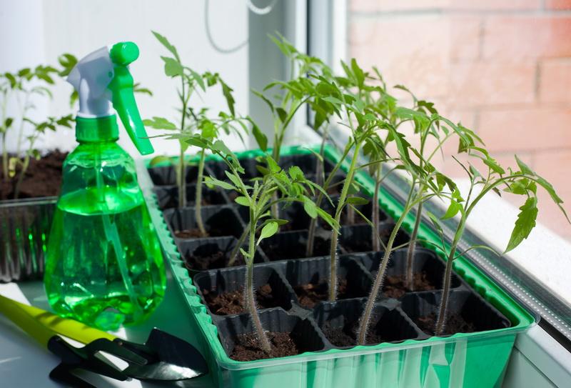 Расчет оптимальных сроков посадки семян на рассаду