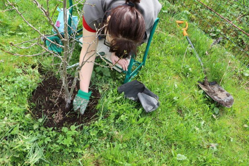 Удобряем сад весной: подкормка для деревьев и кустарников