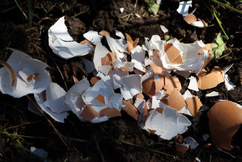 6 способов применения яичной скорлупы на грядках