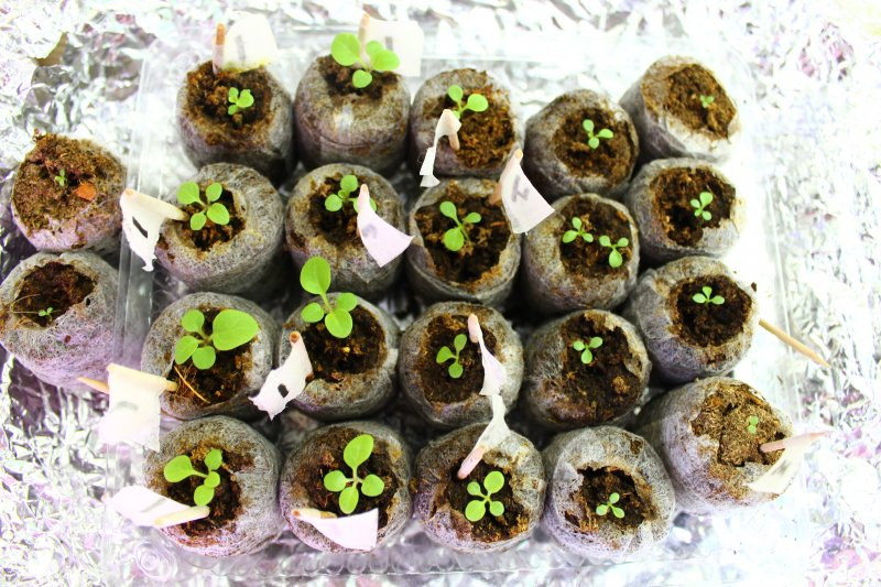 Выращивание рассады: самые необычные способы