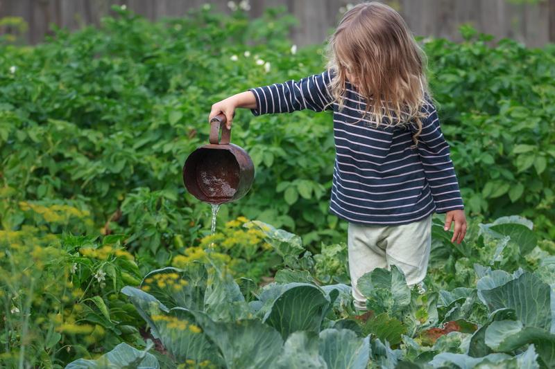 Время рубить капусту: 9 золотых правил выращивания