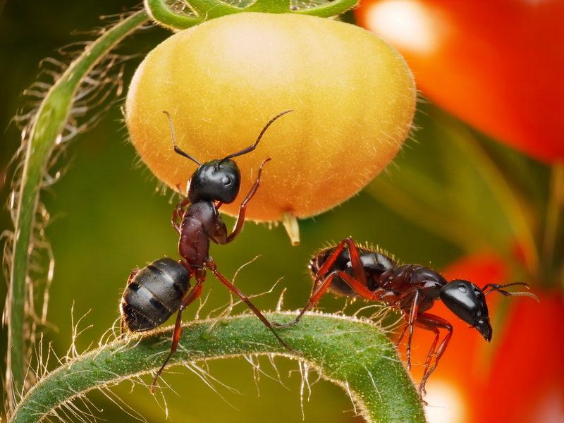Избавление от муравьев на участке — результативные способы