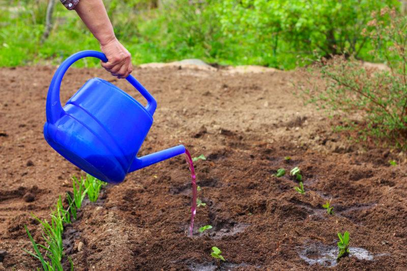 Эффективные удобрения для клубники в период цветения