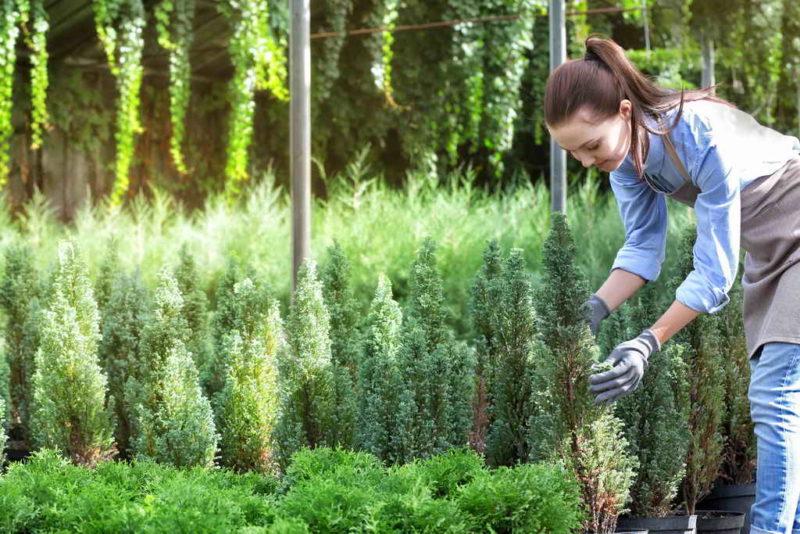 Как сохранить саженцы культурных растений до весны
