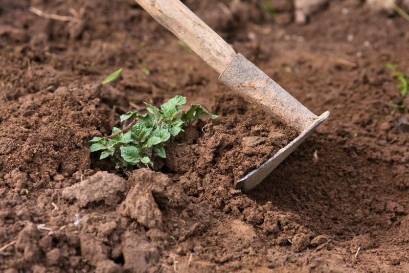 Урожаи, которые могут стать вашими, — 10 кг с квадратного метра по новаторскому методу