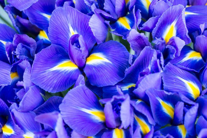 Лучшие цветы для контейнерного сада