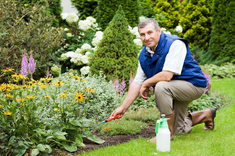 Как разработать заросшую землю под огородный участок