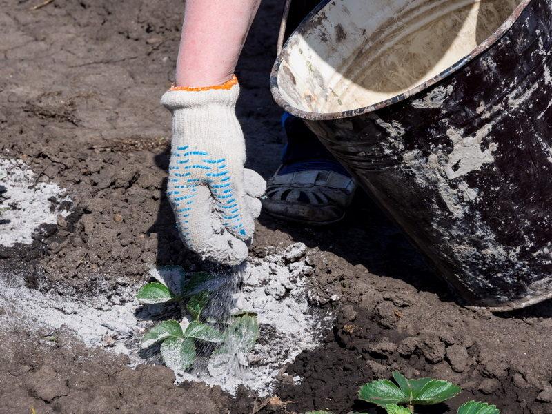 Какую пользу для огорода дает применение доломитовой муки