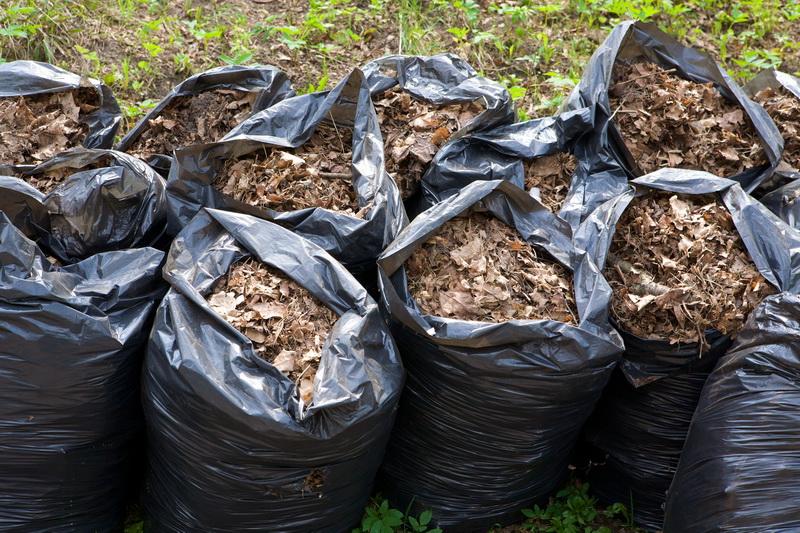 Листва в саду — убрать или оставить?