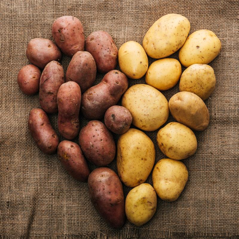 Лучшие желтые сорта картофеля