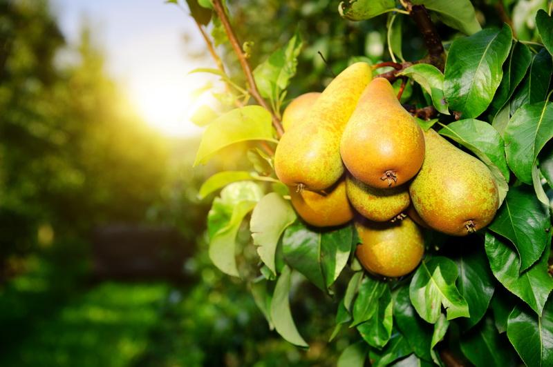 Как правильно разместить плодовые растения в саду: какие можно и нужно сажать рядом, а какие категорически противопоказано