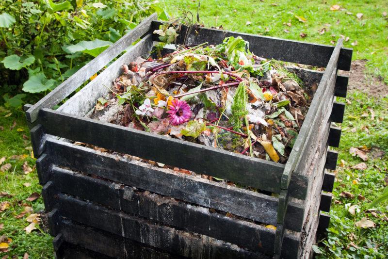 Компостируем падалицу и кухонные отходы: о чем нужно помнить огороднику