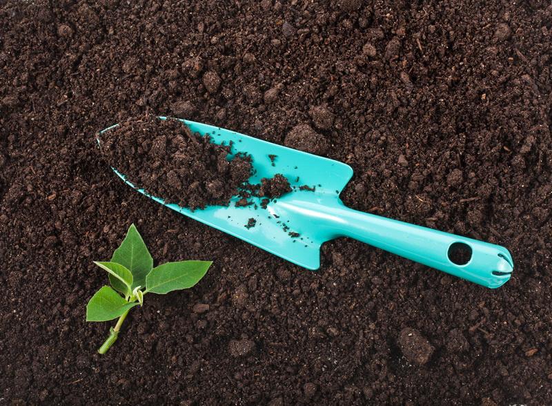 Позаботьтесь об оздоровлении почвы: как полезные бактерии могут стать удачной заменой удобрениям