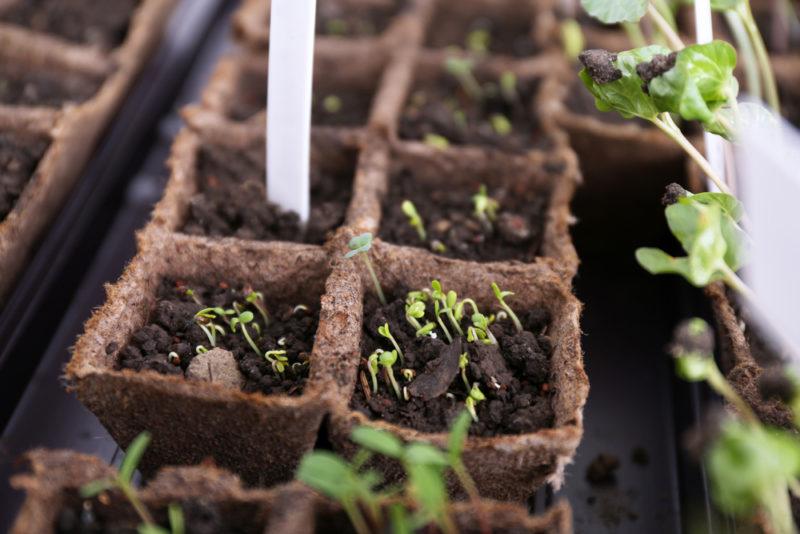 Грамотно подобранный грунт для рассады — гарантия хорошего урожая