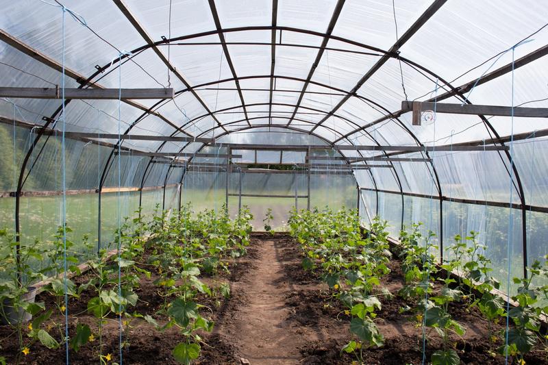 Все о пользе марганцовки на огороде, варианты замены, если препарата не нашлось под рукой
