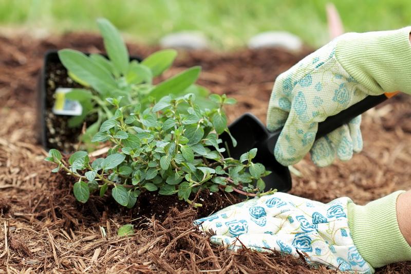 Древесная кора: полезные способы применения на даче
