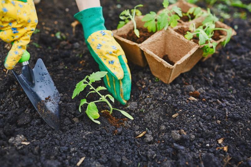 Топ-7 ошибок, которые совершают дачники при выращивании томатов в теплице