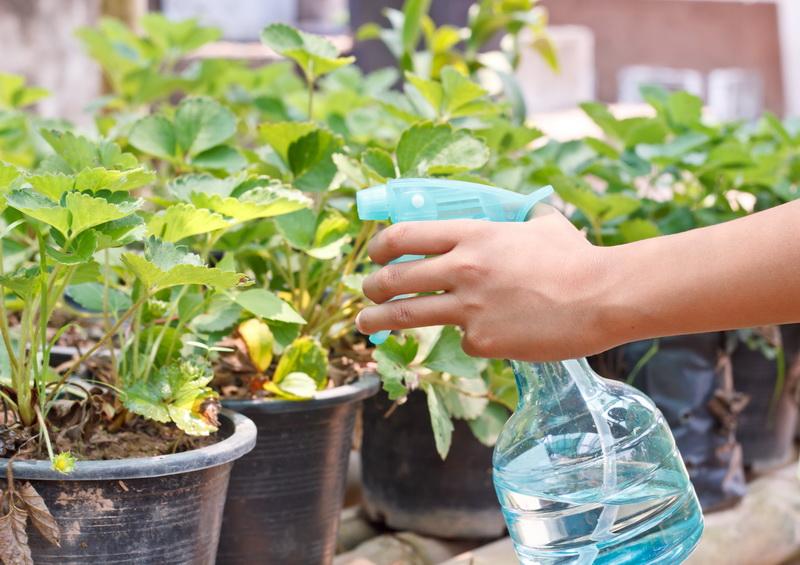 Пятна на листьях клубники — что делать