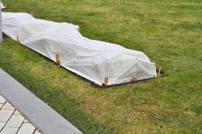 Зимовка растений в саду: мифы