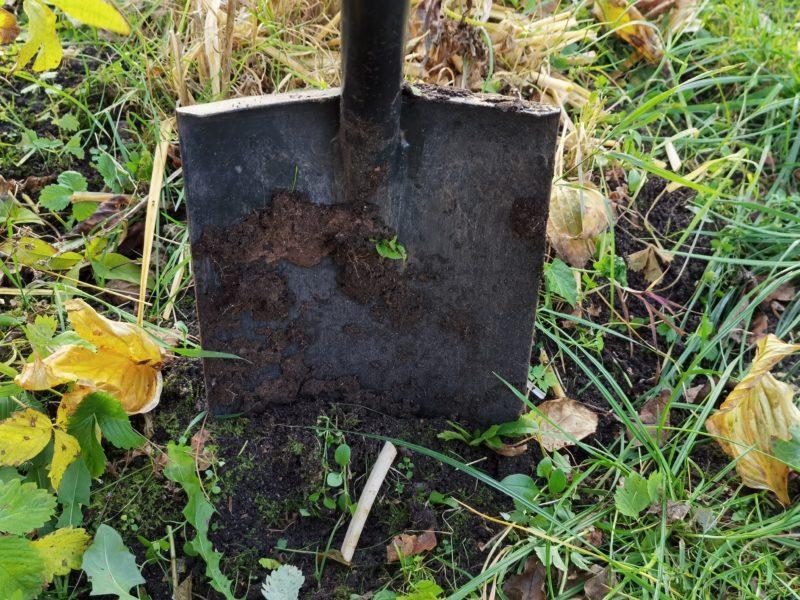 Кислотность грунта — не помеха для «правильного» сада