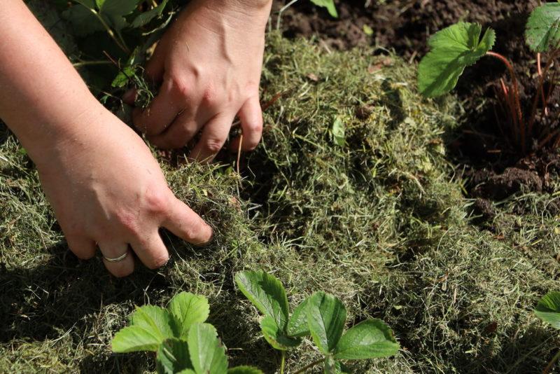 Мульча для сада, какая бывает и как работает
