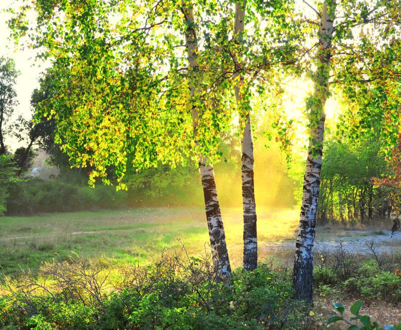 Что грозит садоводу за вырубку деревьев на участке