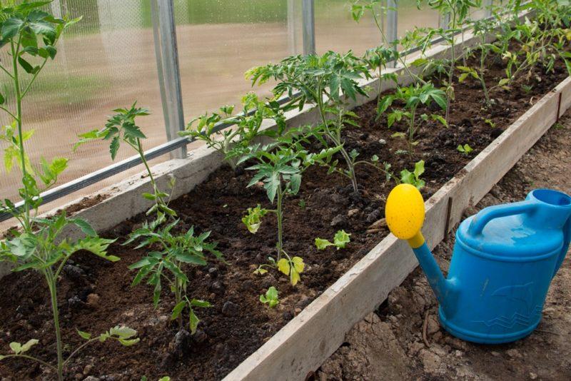 Чем подкормить помидоры для быстрого роста и крупных плодов