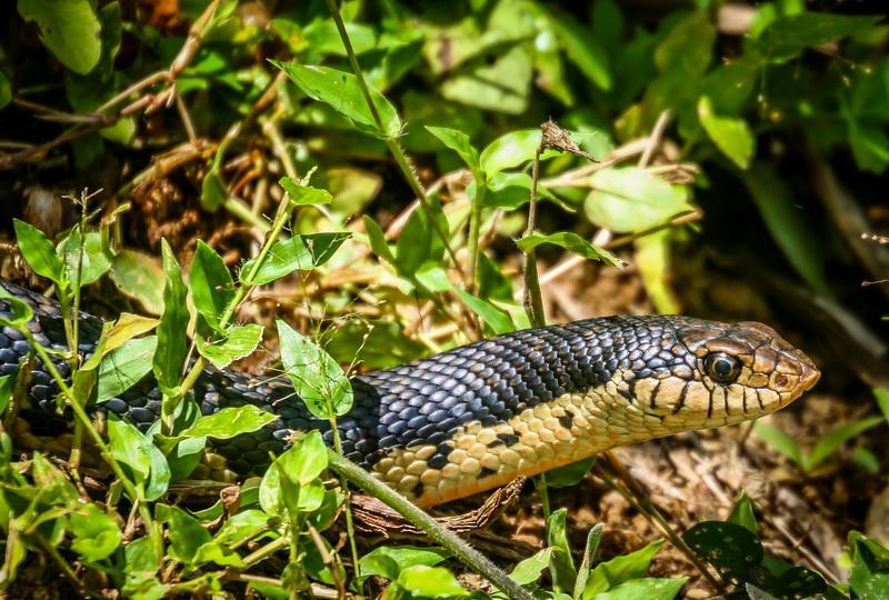 Как избавиться от змей на садовом участке