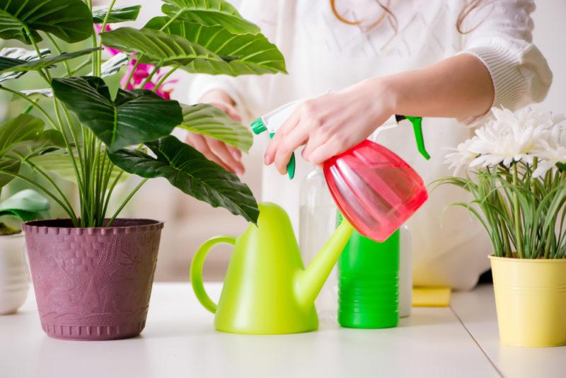 Как спасти умирающее растение при помощи обычных спичек