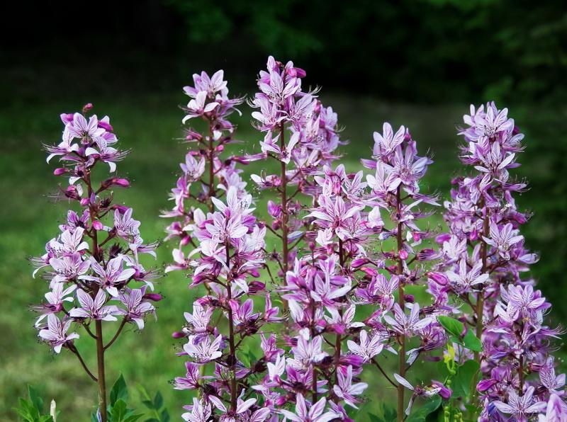 Топ-5 редких растений, которые преобразят ваш цветник