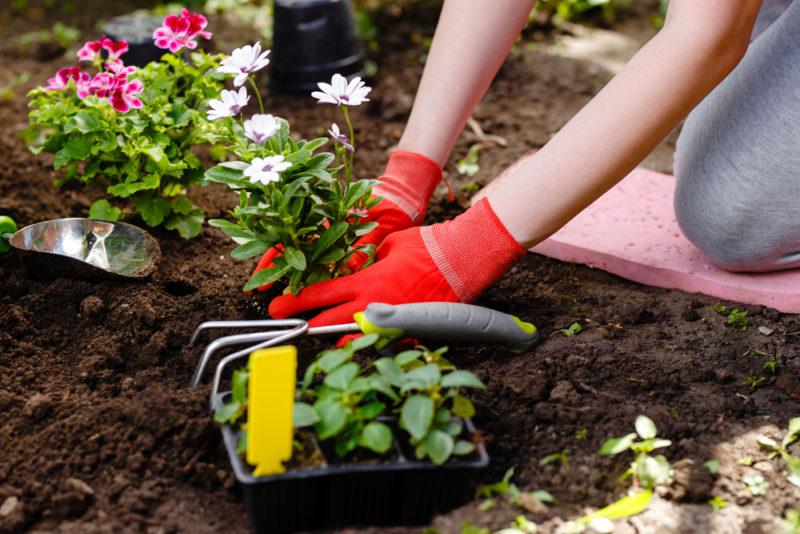 6 простых клумб, которые можно посадить прямо сейчас