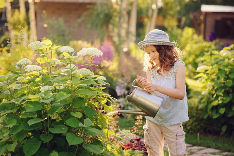 Чем лучше подкармливать гортензию летом — какие подкормки являются самыми полезными и эффективными