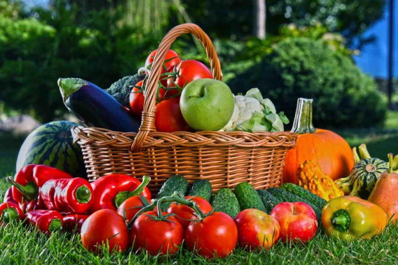 Советы дачникам — как ускорить созревание овощей