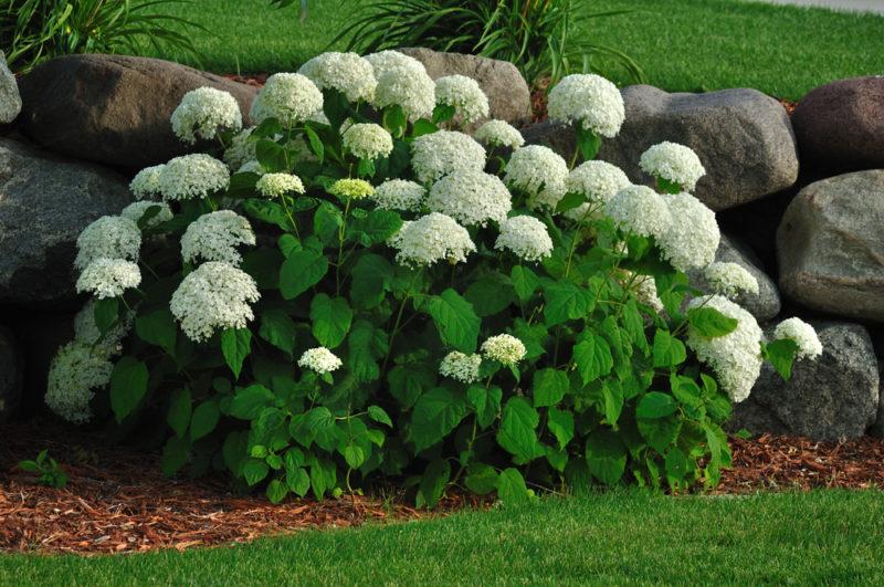 Что можно посадить и посеять в июле на даче