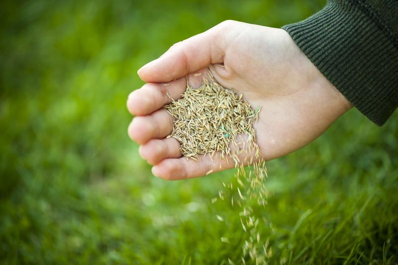 Что мешает созданию красивого газона: 7 основных причин