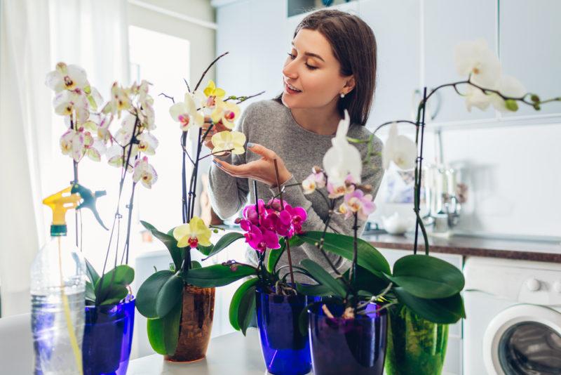Что делать, чтобы орхидеи были пышными и здоровыми