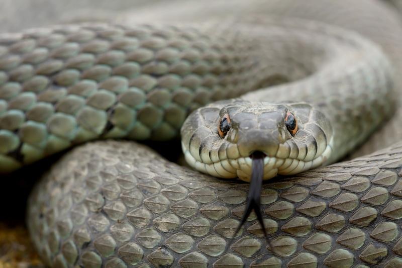 Выгоняем змей с вашего садового участка